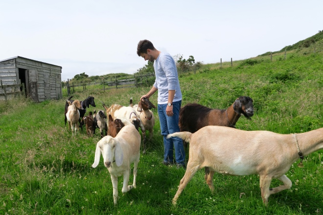 Goats, Ardagh Castle Goat Farm, Baltimore, Ireland